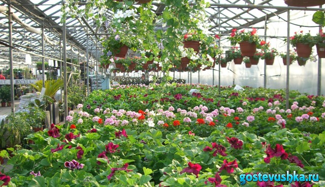Сайт совхоза цветы